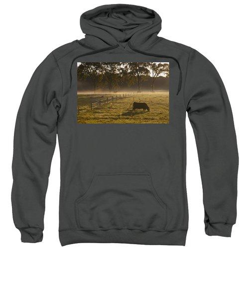 A Cow Grazing In A Field In The Early Sweatshirt
