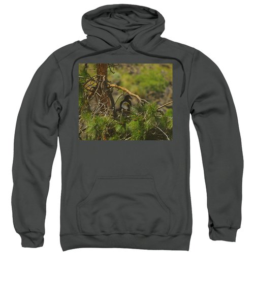 An Eagle And Young Sweatshirt