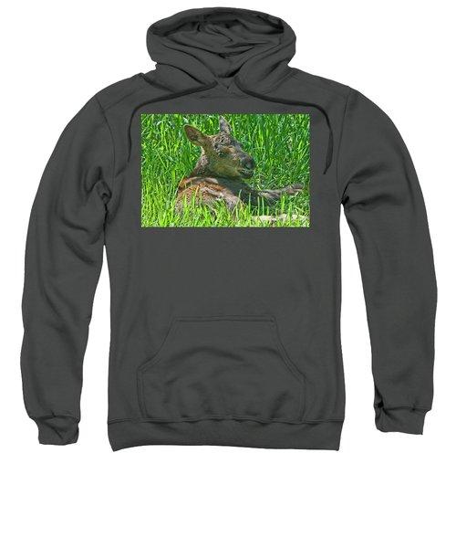 Baby Moose Sweatshirt
