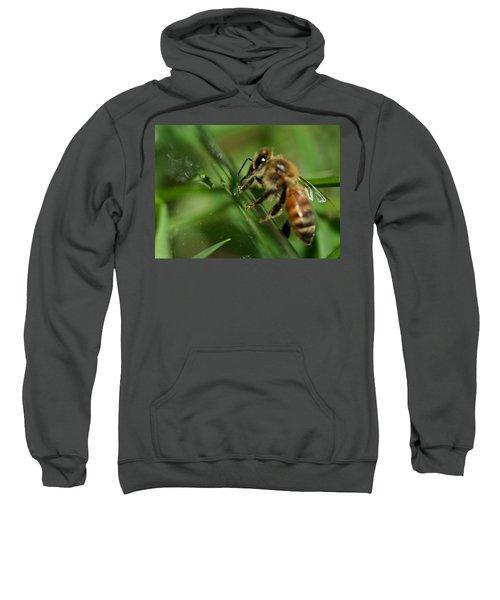 Bee In Green Sweatshirt