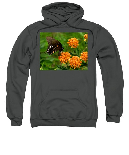 Black Swallowtail Visiting Butterfly Weed Din012 Sweatshirt