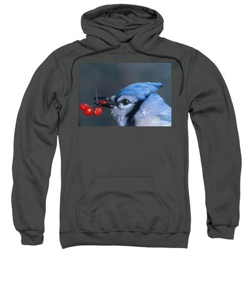 Blue Jay Sweatshirt by Photo Researchers, Inc.