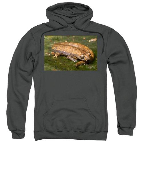 Bolitoglossine Salamander Sweatshirt by Dante Fenolio