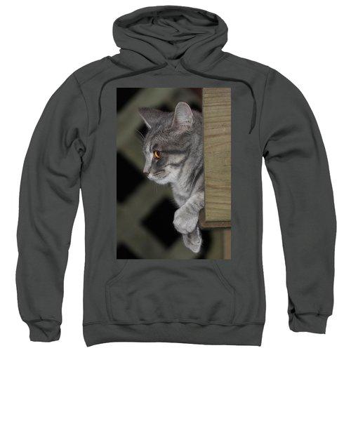 Cat On Steps Sweatshirt