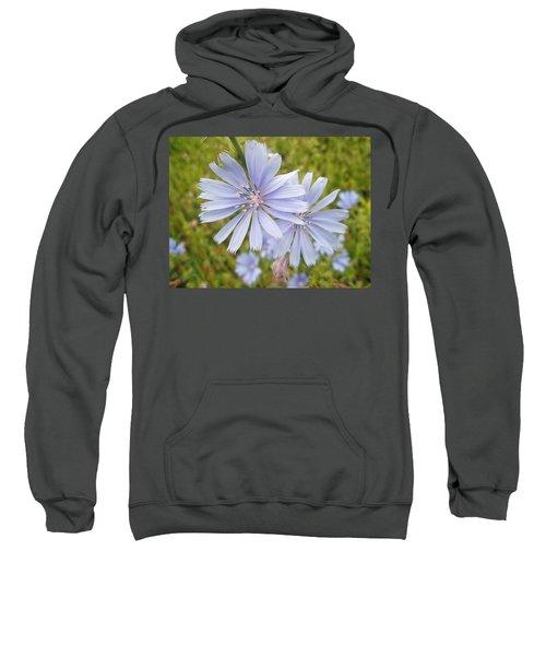 Chicory Wildflower - Cichorium Intybus L.  Sweatshirt
