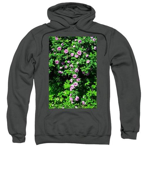 China Rose Sweatshirt