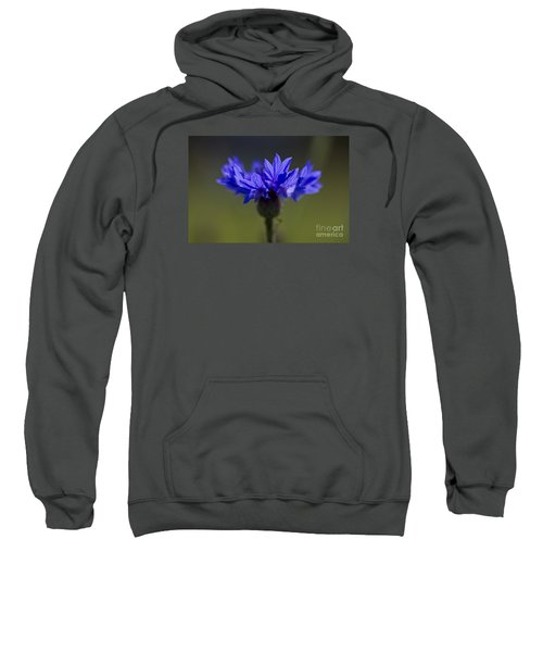 Cornflower Blue Sweatshirt by Clare Bambers
