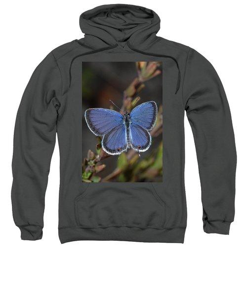 Eastern Tailed Blue Butterfly Sweatshirt