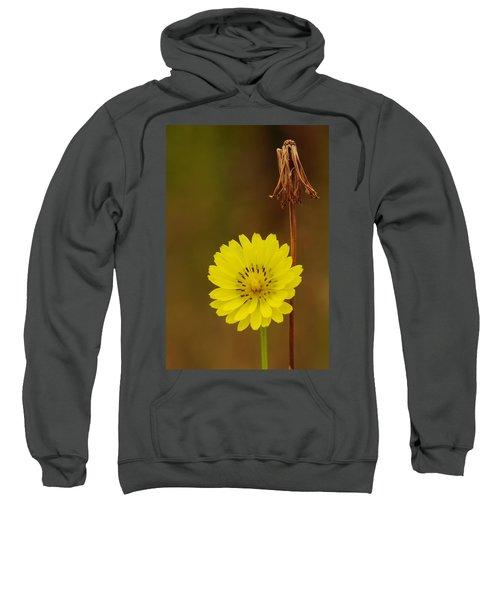 False Dandelion Flower With Wilted Fruit Sweatshirt