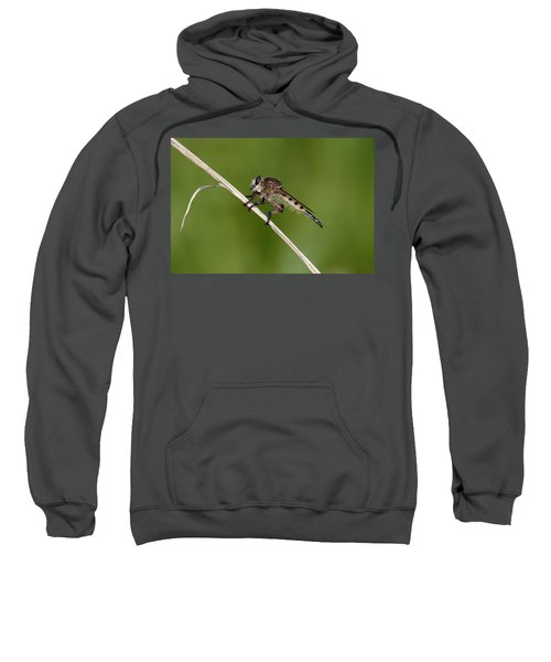 Giant Robber Fly - Promachus Hinei Sweatshirt