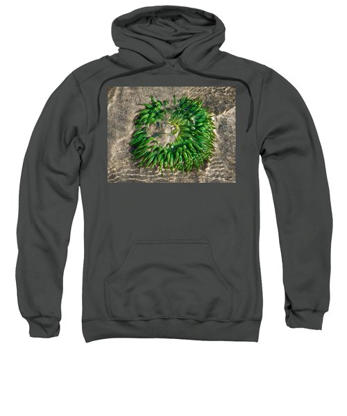 Green Sea Anemone Sweatshirt