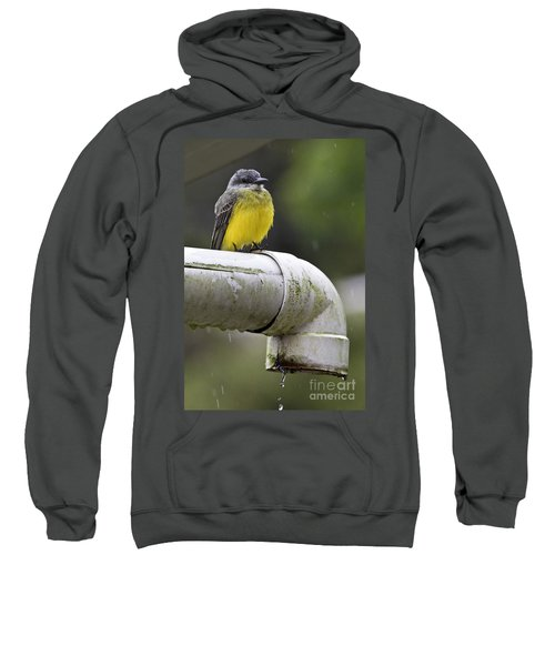 Grey-capped Flycatcher Sweatshirt by Heiko Koehrer-Wagner