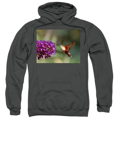 Hummingbird Moth Sweatshirt