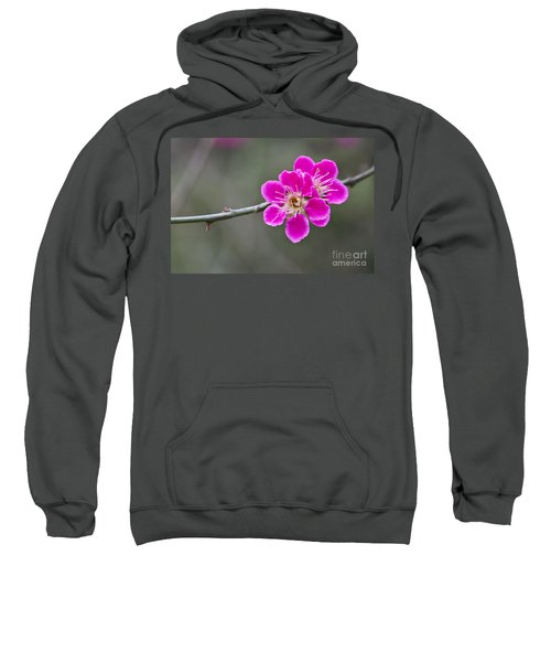 Japanese Flowering Apricot. Sweatshirt by Clare Bambers