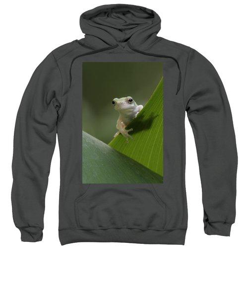 Juvenile Grey Treefrog Sweatshirt