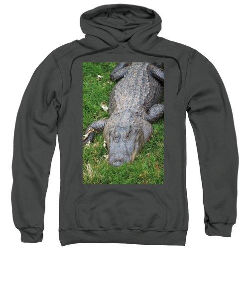 Lazy Gator II Sweatshirt