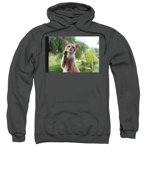 Lovely Cat Sweatshirt
