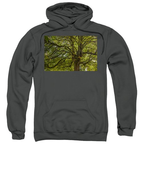 Majestic Tree Sweatshirt