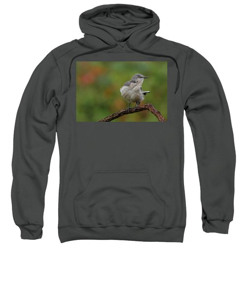 Mocking Bird Perched In The Wind Sweatshirt