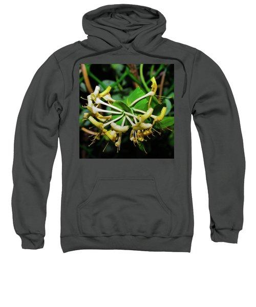 Overblown Perfoliate Sweatshirt