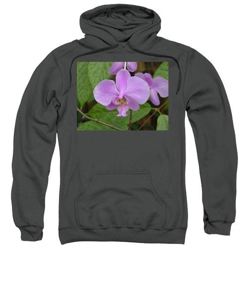 Pale Pink Orchid Sweatshirt