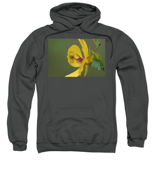 Partridge Pea And Matching Crab Spider With Prey Sweatshirt