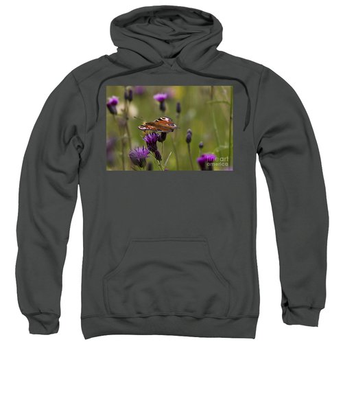 Peacock Butterfly On Knapweed Sweatshirt