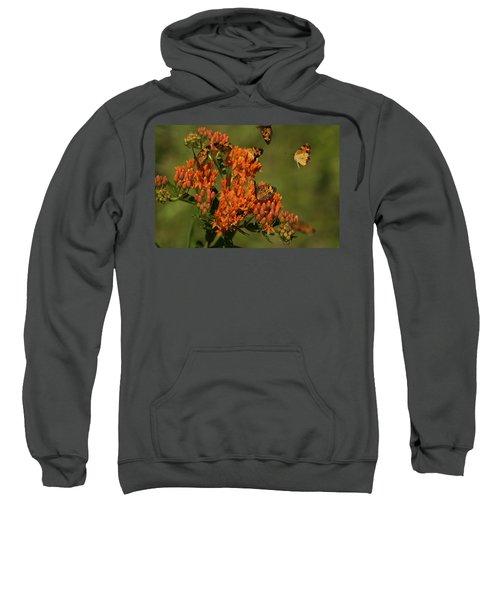 Pearly Crescentpot Butterflies Landing On Butterfly Milkweed Sweatshirt