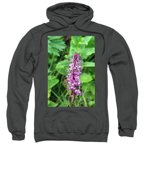 Pink Elephants Sweatshirt