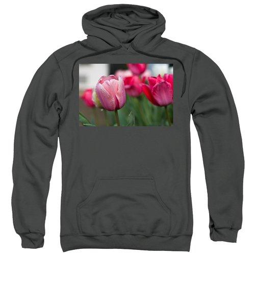 Pink Tulips With Water Drops Sweatshirt