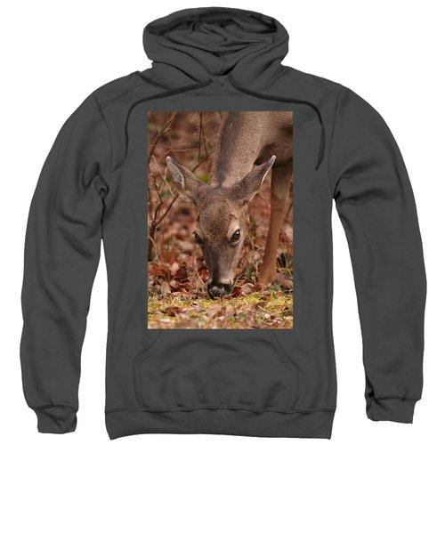 Portrait Of  Browsing Deer Two Sweatshirt
