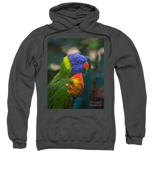 Posing Rainbow Lorikeet. Sweatshirt
