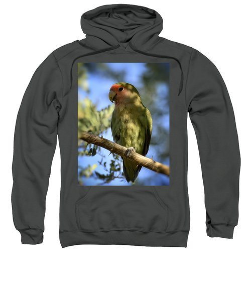 Pretty Bird Sweatshirt by Saija  Lehtonen