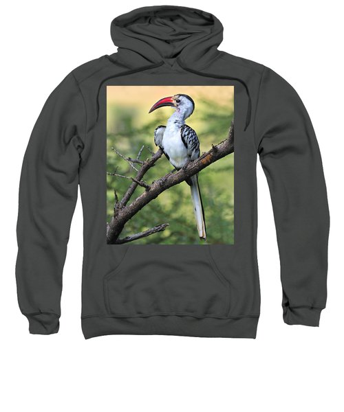 Red-billed Hornbill Sweatshirt