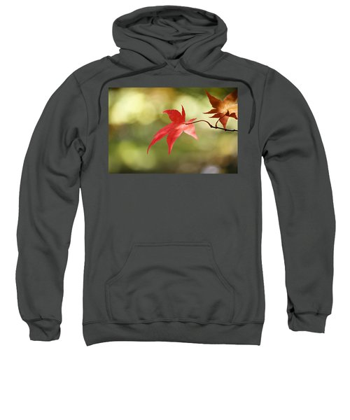 Red Leaf. Sweatshirt by Clare Bambers