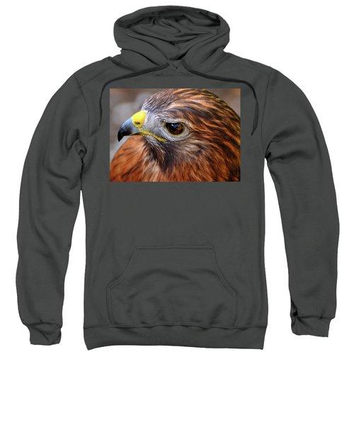 Red-tailed Hawk Close Up Sweatshirt