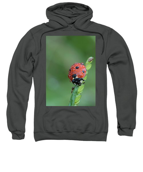 Seven-spotted Lady Beetle On Grass With Dew Sweatshirt