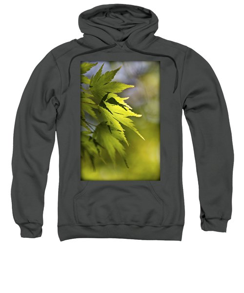 Shades Of Green And Gold. Sweatshirt by Clare Bambers