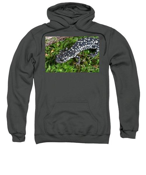Slimy Salamander Sweatshirt by Ted Kinsman