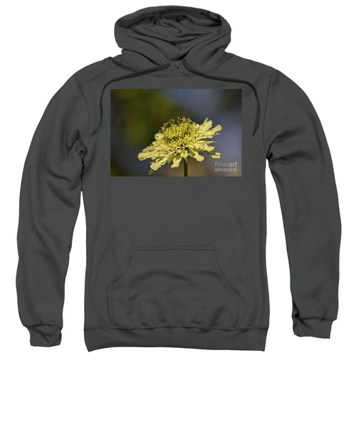 Soft Yellow. Sweatshirt by Clare Bambers