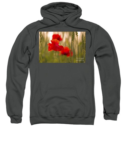 Sunset Poppies. Sweatshirt by Clare Bambers