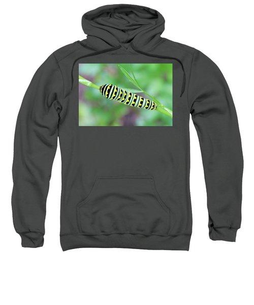 Swallowtail Caterpillar On Parsley Sweatshirt