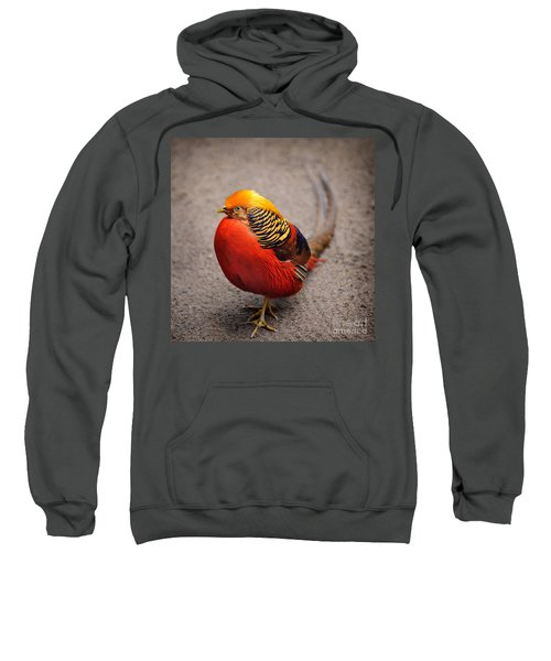 The Golden Pheasant Sweatshirt