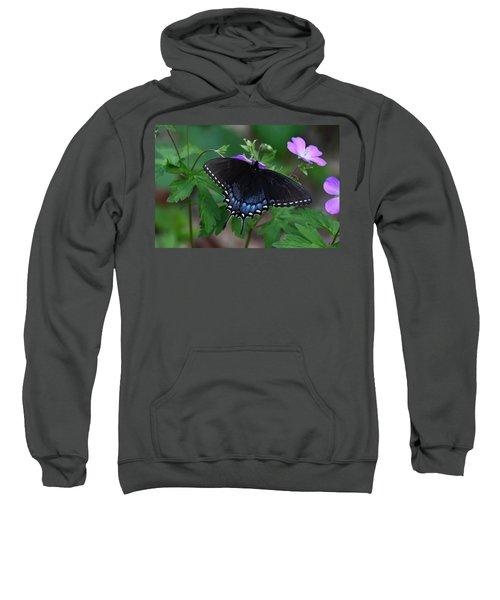 Tiger Swallowtail Female Dark Form On Wild Geranium Sweatshirt