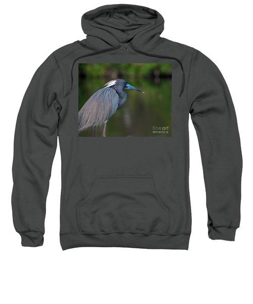 Tricolored Heron Sweatshirt