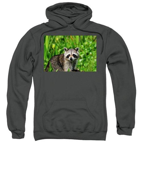 Wetlands Racoon Bandit Sweatshirt