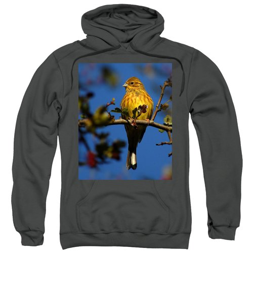 Yellowhammer Sweatshirt