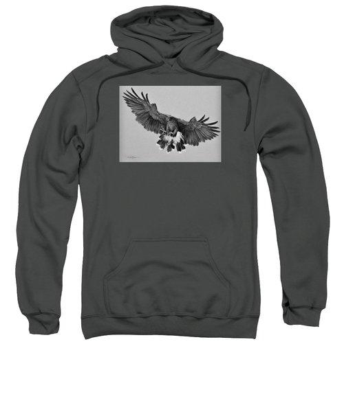 Da181 Harris's Hawk By Daniel Adams Sweatshirt