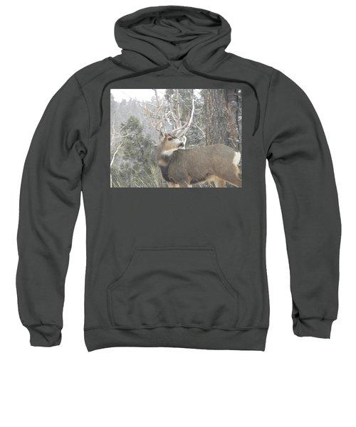 Buck Front Yard Divide Co Sweatshirt