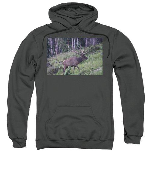 Bull Elk Rmnp Co Sweatshirt